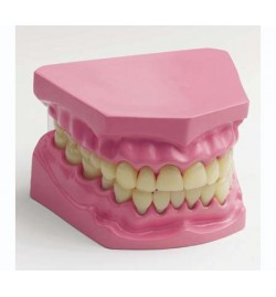 Μοντέλο Οδοντοστοιχίας Μικρό