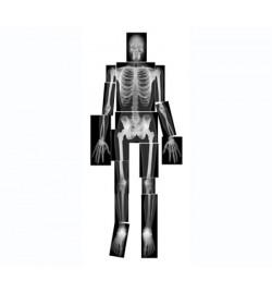 Human X-Ray print set A4