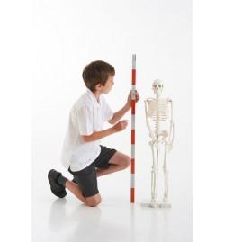 Half-Scale Skeleton 85cm