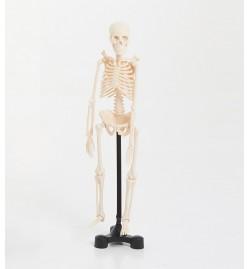 Mini Skeleton 46cm